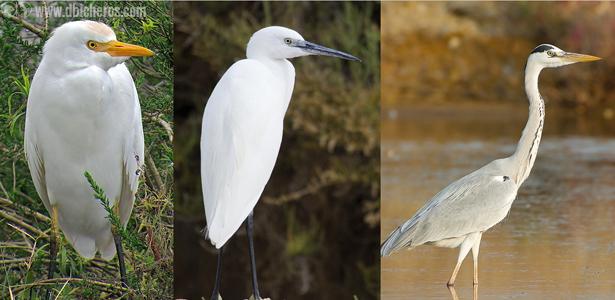 aves acuáticas humedal curso ornitología
