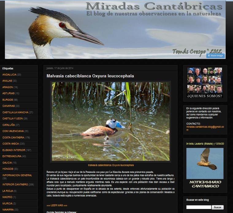 blog aves miradascantabricas.blogspot.com/