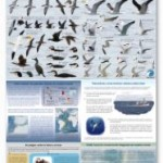 FAME guia de aves
