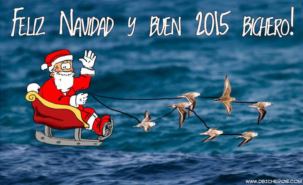 Santa Claus migración adelantada correlimos tridáctilos y comunes