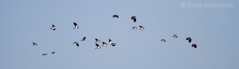 1.4 Las aves de una de las especies deciden huir adentrándose hacia el humedal