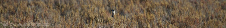 2.1 Mmm..ese pájaro tan típico en lo alto de un arbusto...
