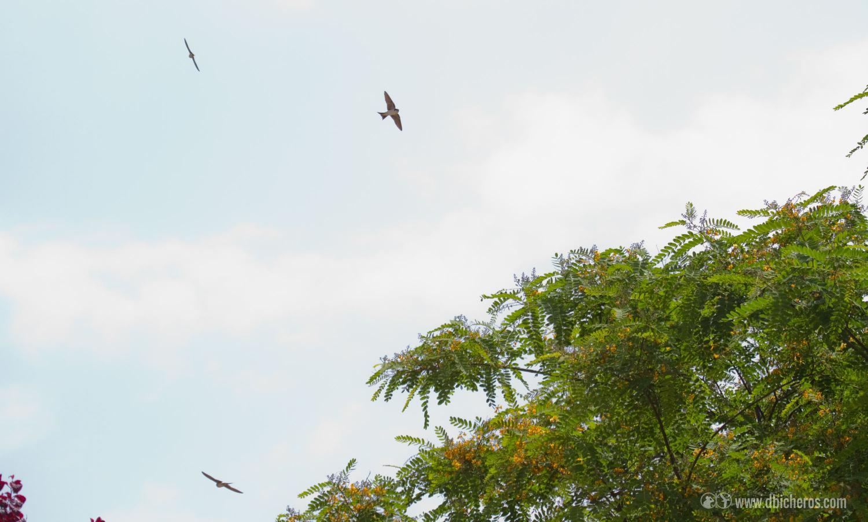 1.6 por cierto, un bando de aves cicleantes no para de sobrevolarnos
