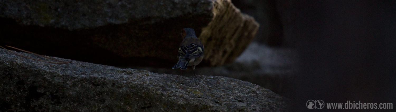 2.4 Mientras que abajo, en las rocas del suelo, otro bicho busca semillas en el suelo.