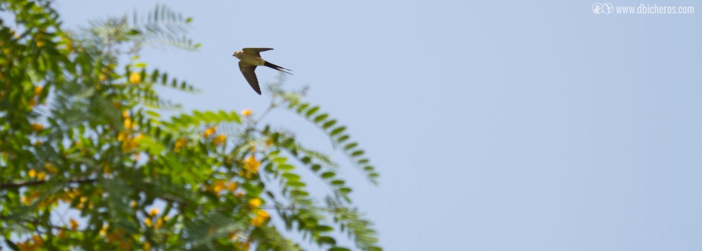 2.2 Y mientras tanto, las aves de antes nos siguen sobrevolando...pero hay una entre ellas un tanto diferente...¡Qué curioso!