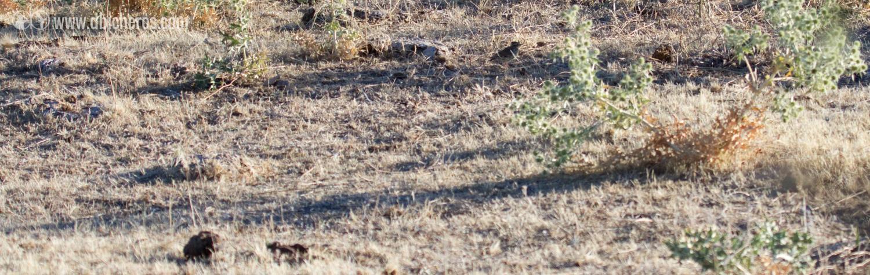 2.4 Uffff, qué difícil...este bicho en el suelo no me suena nada...Quizá mirando en la guía de aves...
