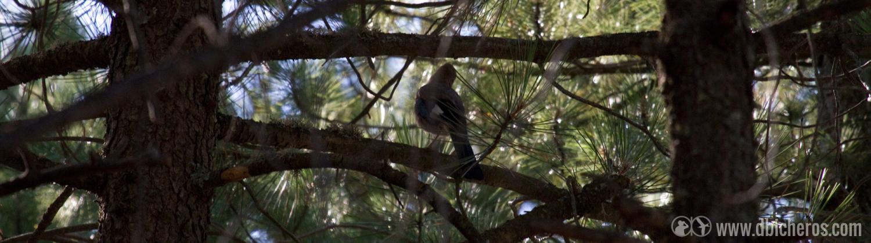 2.3 Un ave de mucho mayor tamaño se mueve entre las ramas!!