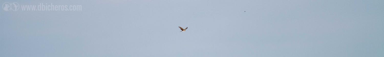 2.4 Algo vuela sobre el humedal...difícil de identificar, pero no imposible...