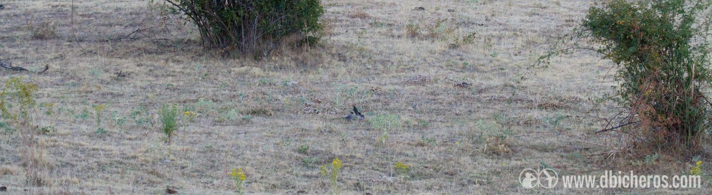 2.5 Parecen dos bichos en el suelo armando jaleo....al estar a la sombra no se ven bien...