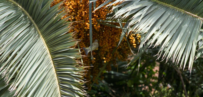 1.3 Algo se mueve entre las palmeras...parece un joven