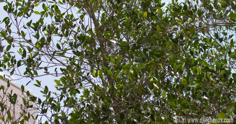 3.1 Mmmm....Parece que en aquel arbol hay un bicho metido entre las ramas.