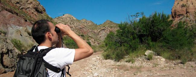 Observador de aves
