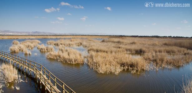 Las zonas húmedas son uno de los lugarers donde mayor número de especies de aves podéis encontrar