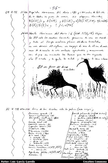Cuaderno de campo en orden temporal. Doñana 2004)
