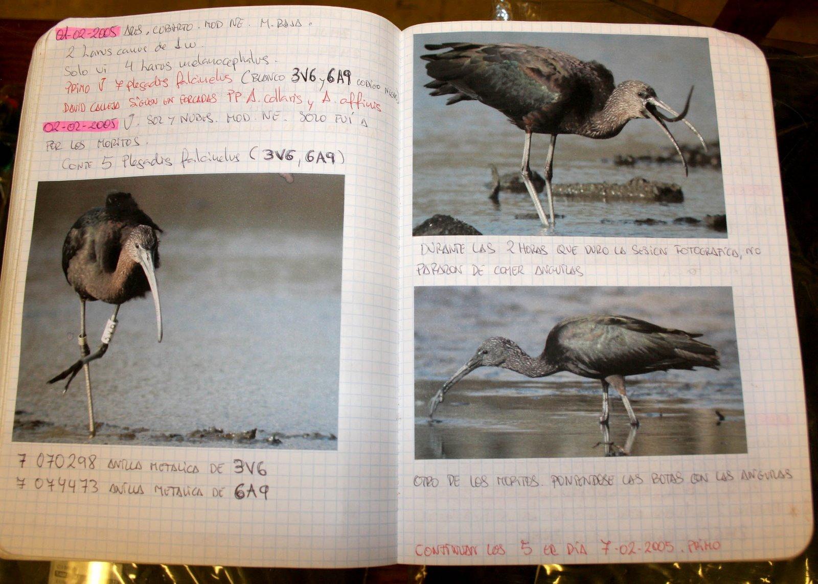 Cuaderno de campo ilustrado con fotografías (C) Antonio Gutiérrez