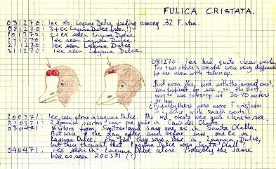 Ficha de especie de Fulica Cristata por Vigo Ree (Cuadernos de Doñana)