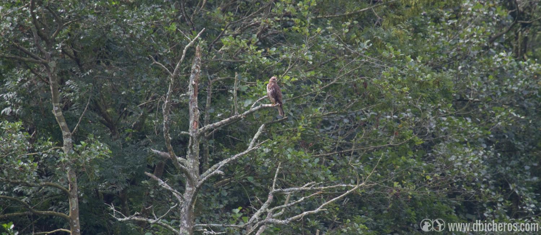 4. , cerca de unos cultivos en ladera, algo posado en un árbol nos espera.