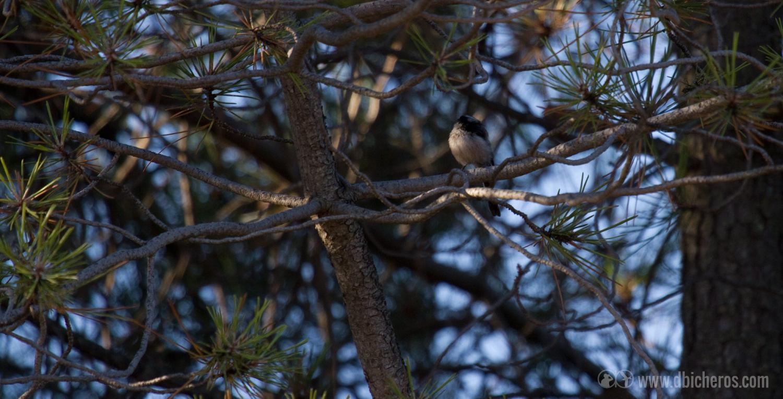 2.1 Un pequeño bando de minúsculas aves nos rodea con sus reclamos característicos