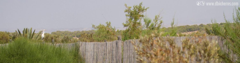 1.5 Ya en el vallado exterior del humedal, vemos que nos vigila un ave particular