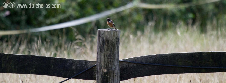 1.2 Un poco más adelante, sobre la valla de una finca, nos despide oteando otra pequeña ave.